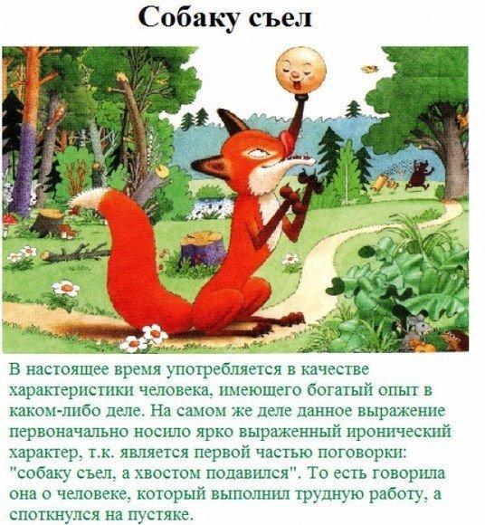История русских пословиц и поговорок