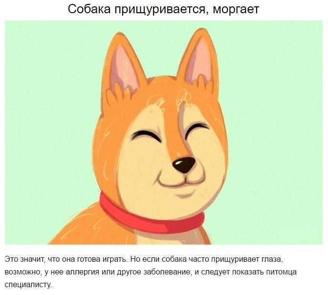 10 приемов для тех, кто всегда мечтал понимать собак 6PObNqkDaU0