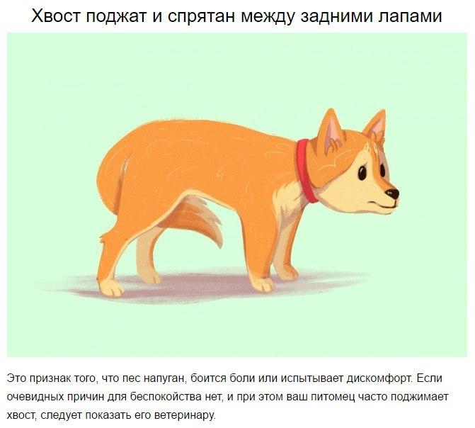 10 приемов для тех, кто всегда мечтал понимать собак 7tMfmOJ2XQE