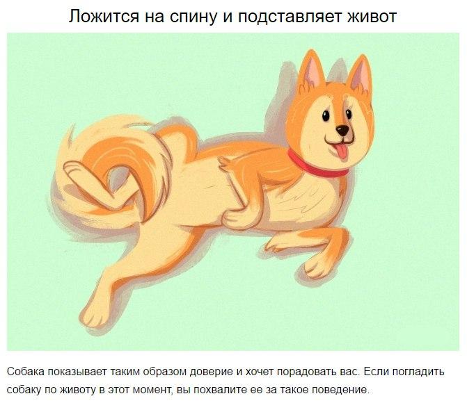 10 приемов для тех, кто всегда мечтал понимать собак h0oZAH7qGbU