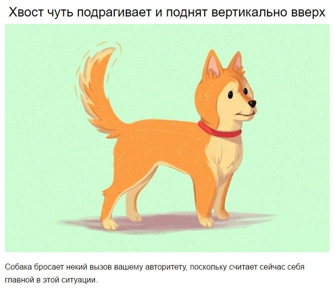 10 приемов для тех, кто всегда мечтал понимать собак KYy4RR1gx4U