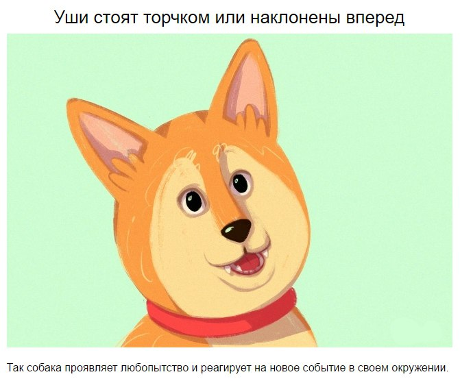 10 приемов для тех, кто всегда мечтал понимать собак MI0rhYABkHo