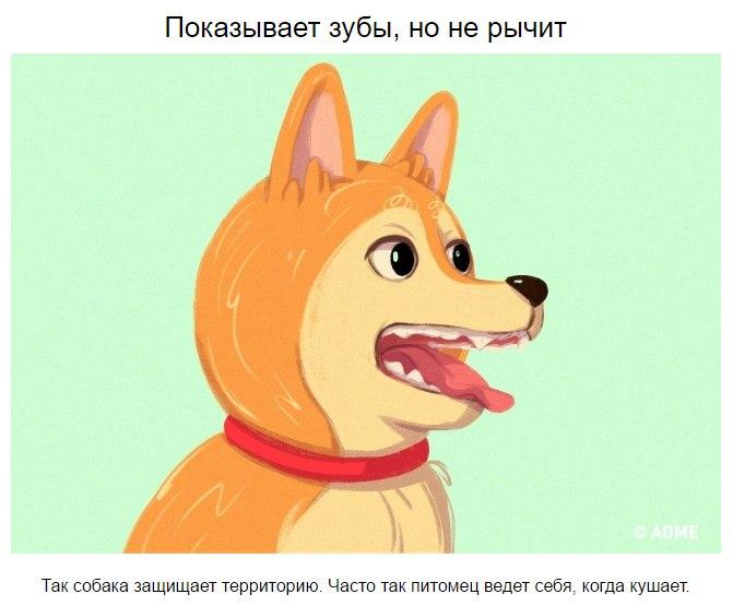 10 приемов для тех, кто всегда мечтал понимать собак Tvgn2GtzpHE