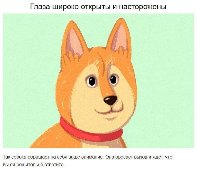 10 приемов для тех, кто всегда мечтал понимать собак WcWNG7OGoCA