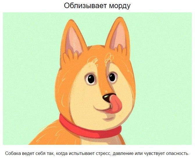 10 приемов для тех, кто всегда мечтал понимать собак yQW7ZZCNgVI