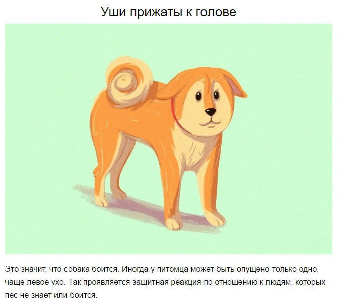 10 приемов для тех, кто всегда мечтал понимать собак zUNcjStlWQo