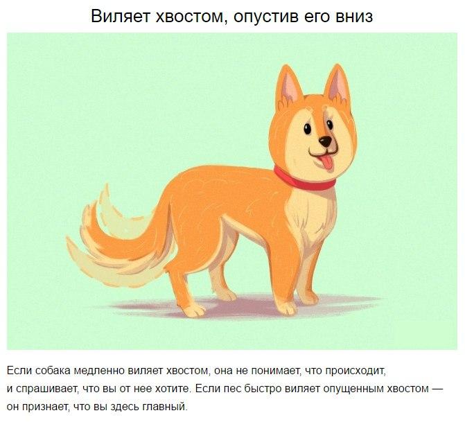 10 приемов для тех, кто всегда мечтал понимать собак
