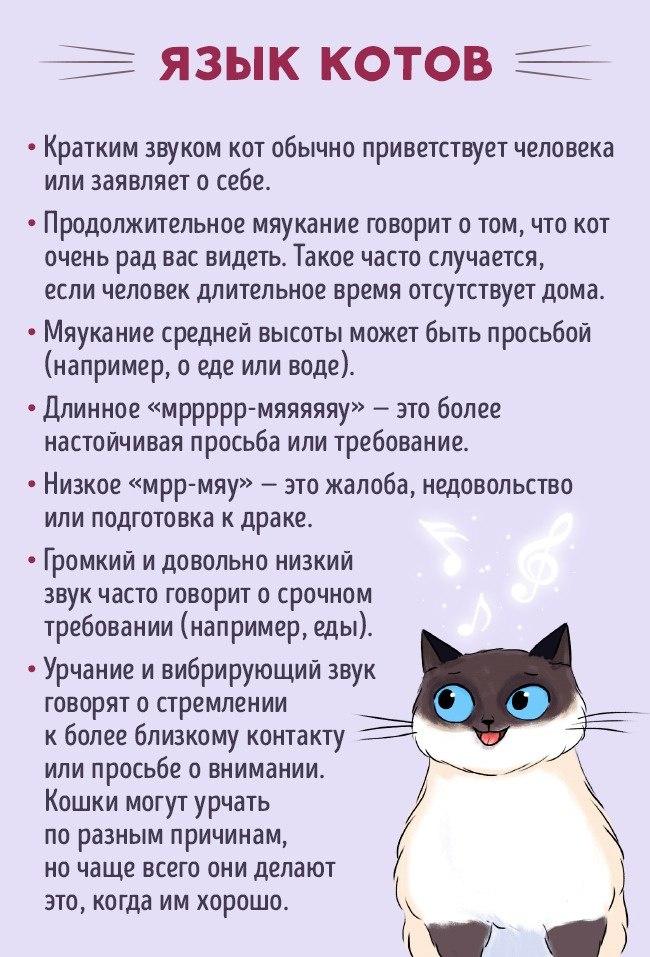 Как найти общий язык со своим котом7