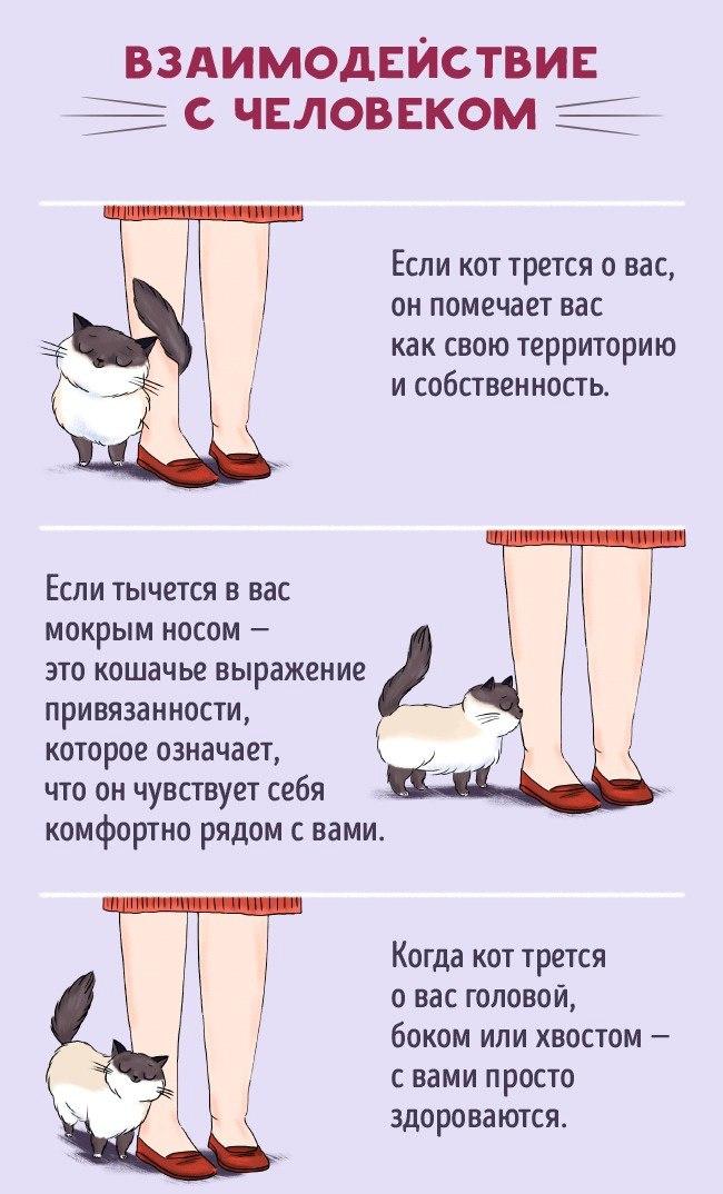 Как найти общий язык со своим котом5