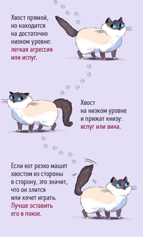 Как найти общий язык со своим котом3