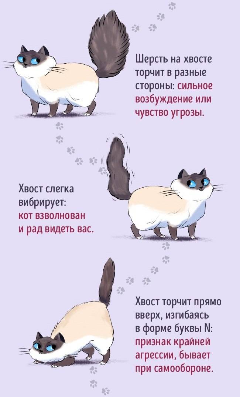 Как найти общий язык со своим котом2