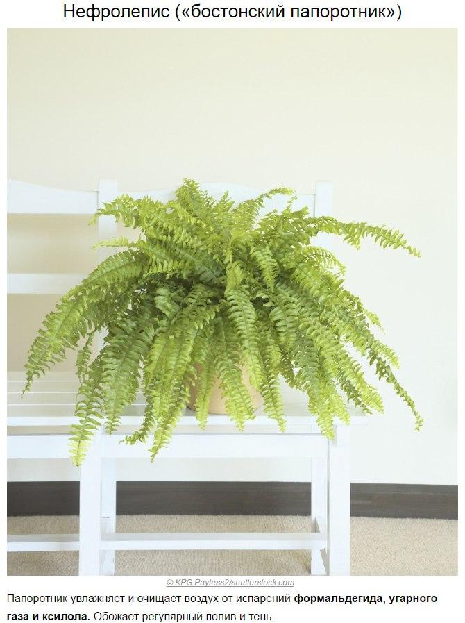 Топ-10 растений для очистки воздуха по мнению NASA9
