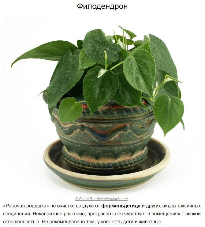 Топ-10 растений для очистки воздуха по мнению NASA8
