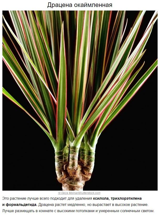 Топ-10 растений для очистки воздуха по мнению NASA7