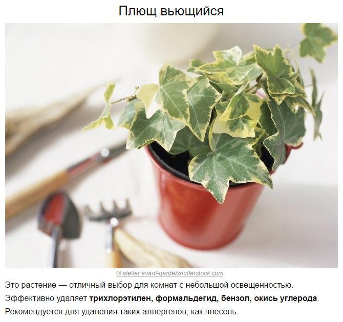 Топ-10 растений для очистки воздуха по мнению NASA6
