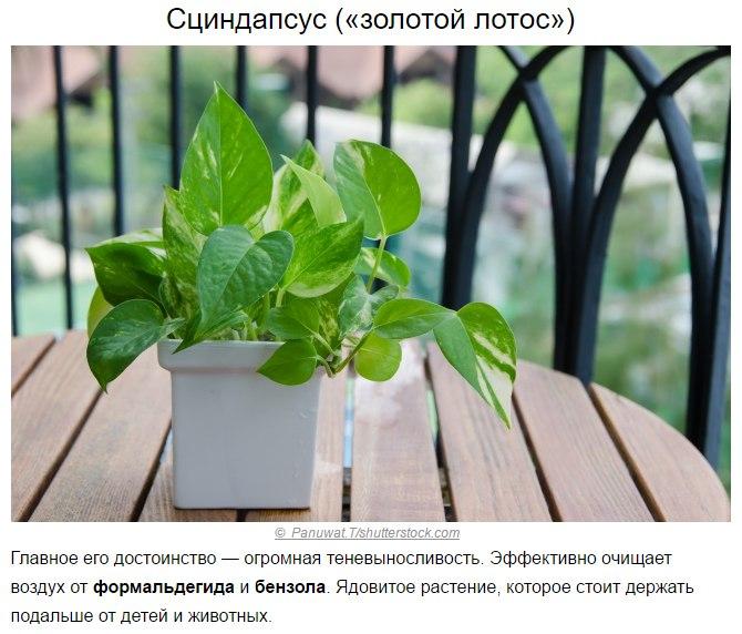 Топ-10 растений для очистки воздуха по мнению NASA3