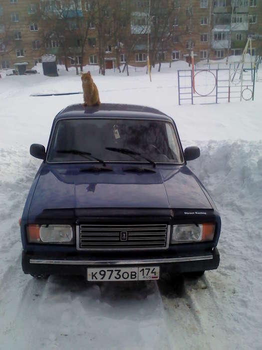 98530945_Kotye_na_avto
