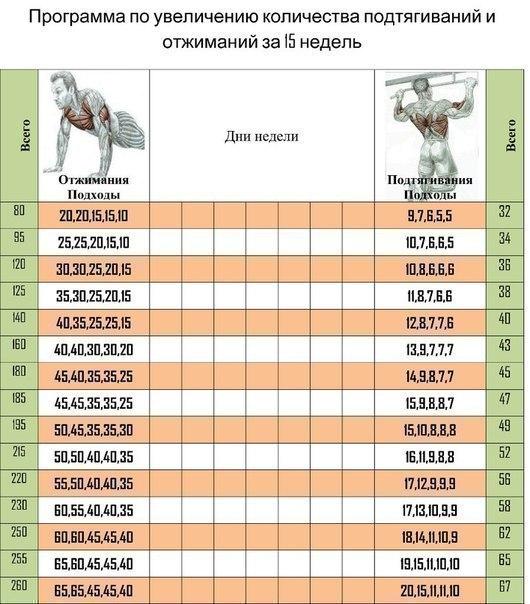 Программа по увеличению количества подтягиваний и отжиманий за 15 недель