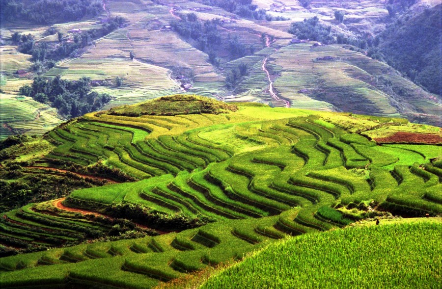 rice_terraces,_sapa_13235