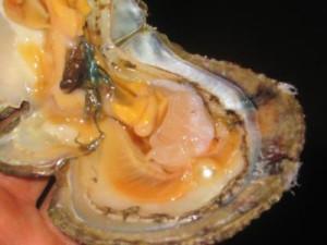 natural-arabian-gulf-pearl-21280250