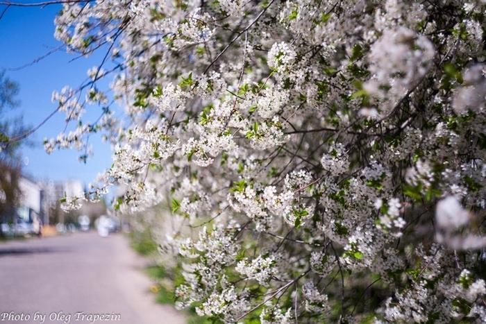 Воронеж весной фото капы для