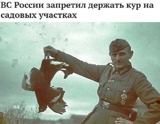 Целая Генпрокуратура РФ. Курка, млэко, яйки