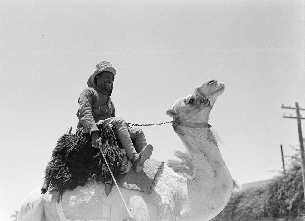 Полицейский на верблюде, Египет, 1935.