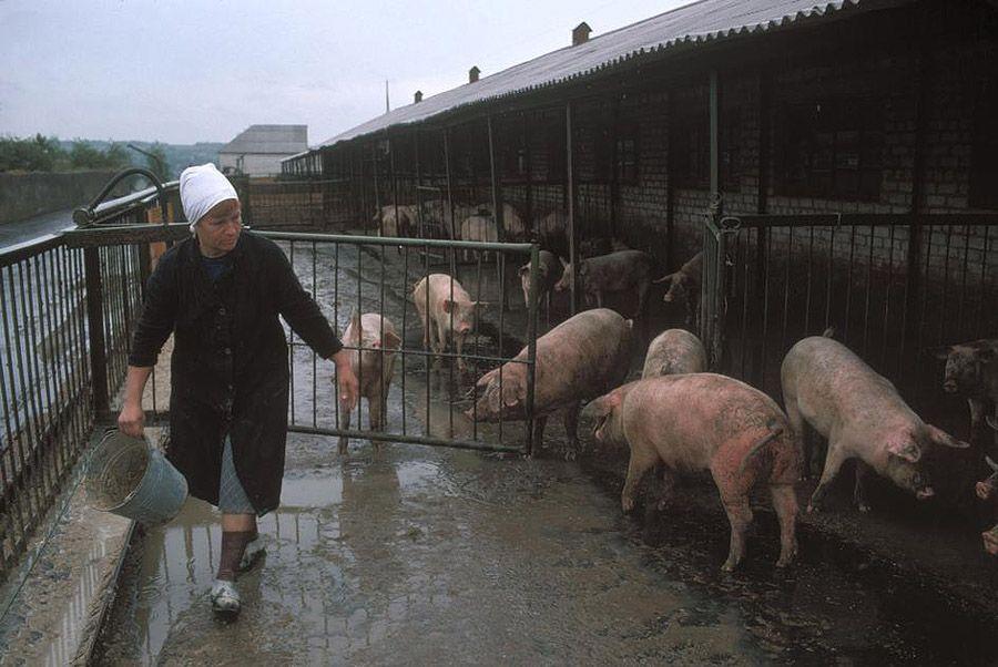 UAof80s07Донецк. Колхозная ферма шахтеров, которая обеспечивает их едой. 1988 год.