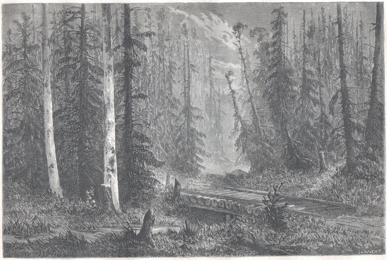 0_f1d58_f2e9ec76_XXXL1867. Русский лес