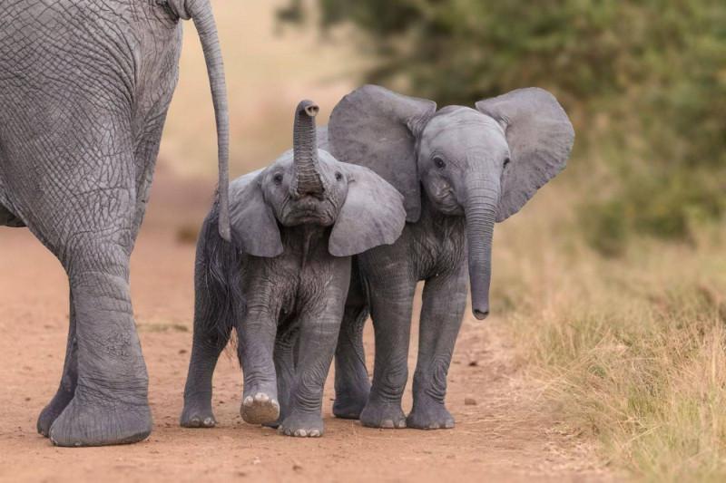слонята довольны
