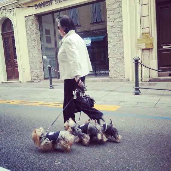 Дамочка с собачками