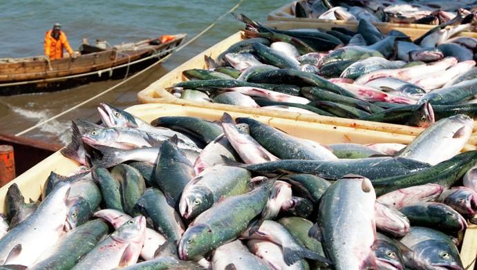 У нас отличные стартовые позиции для продвижения отечественной рыбы