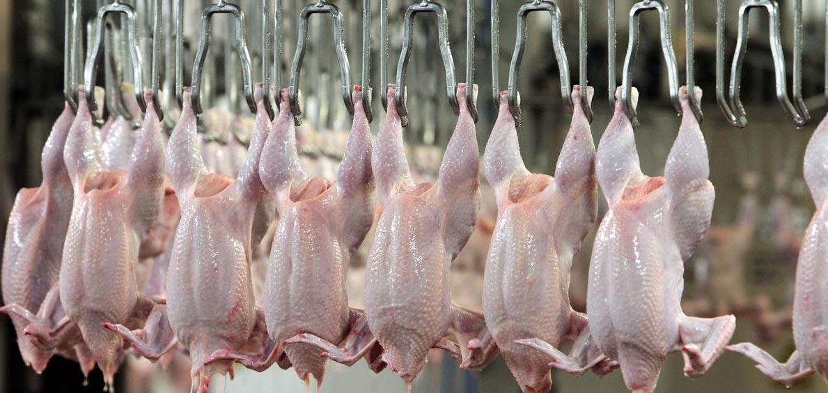 Производство мяса птицы на душу населения в мире в 1961 году 1980 году 2000 году 2018 году