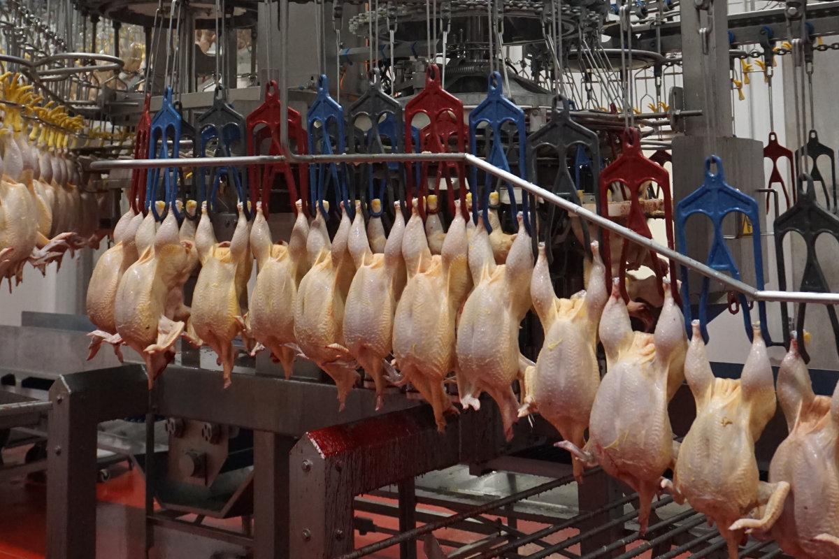 Производство мяса птицы в России