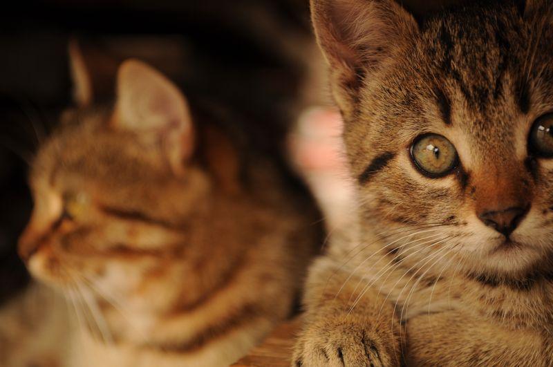 Odessa-cat