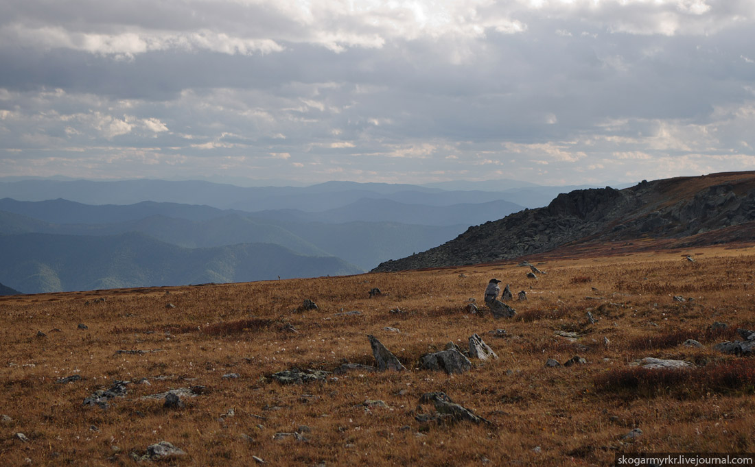 ворон на перевале Багаташ, Горный Алтай осенью