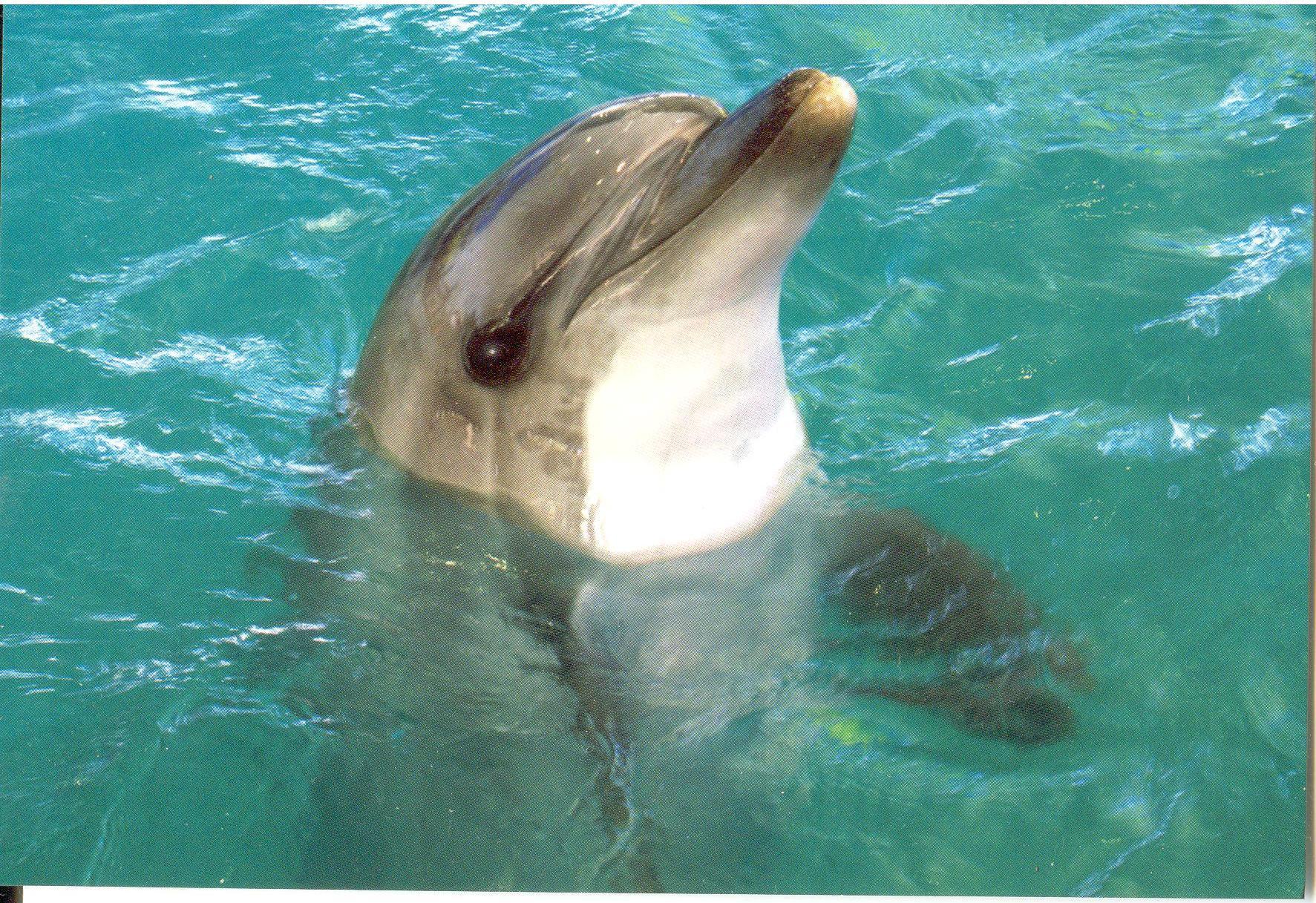 1 обмен (рисунки Наны Деменковой) + 1 лотерея (дельфины) 6