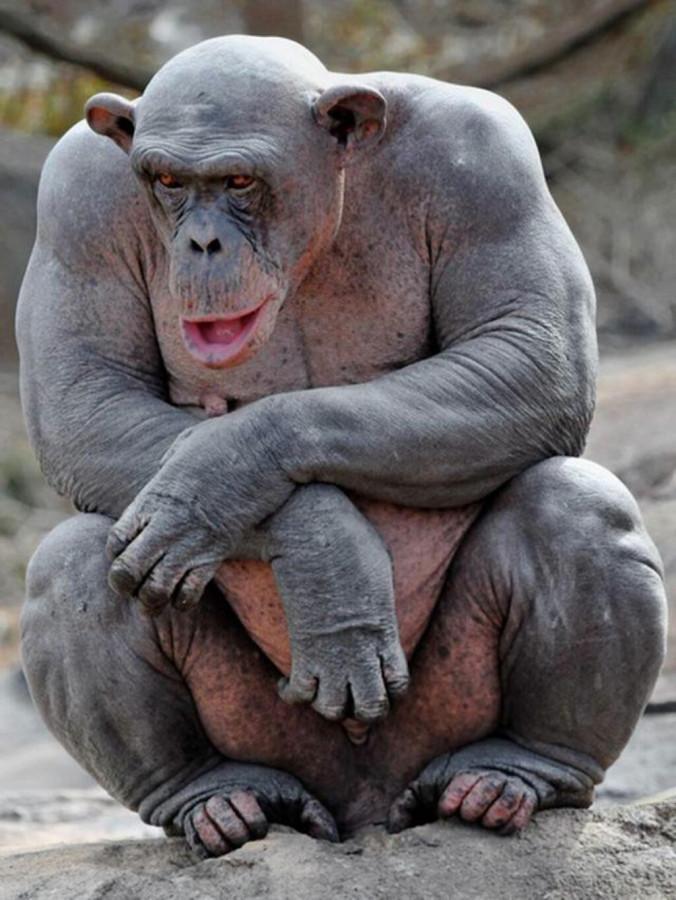 негр-горилла.jpg
