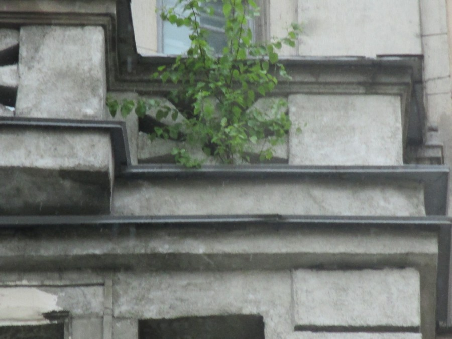 Дерево Союза Печатников - 1.JPG