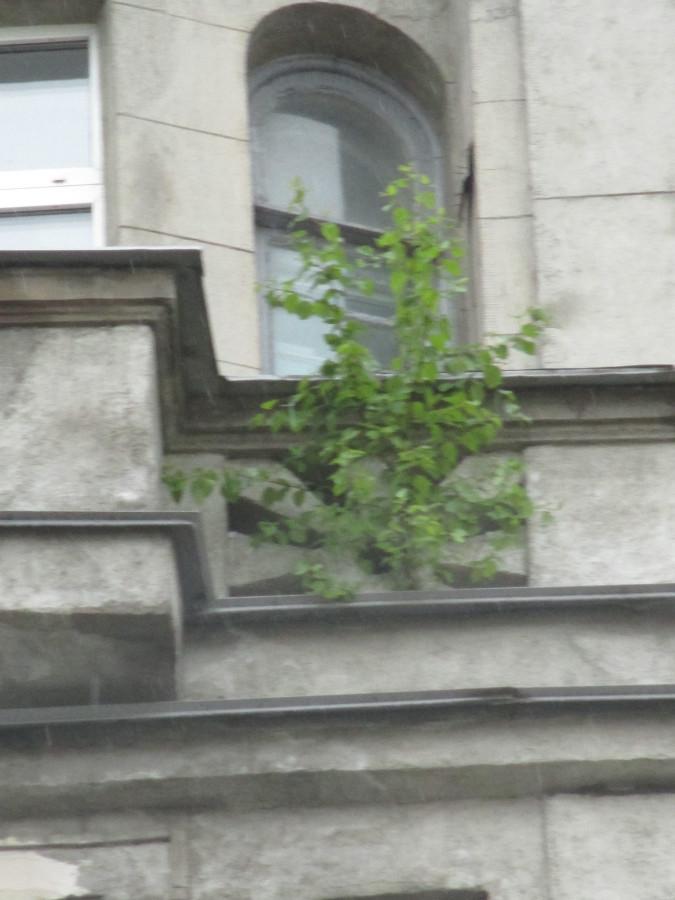 Дерево Союза Печатников - 2.JPG
