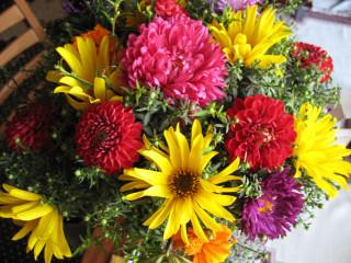 Квіти просто так осінні квіти