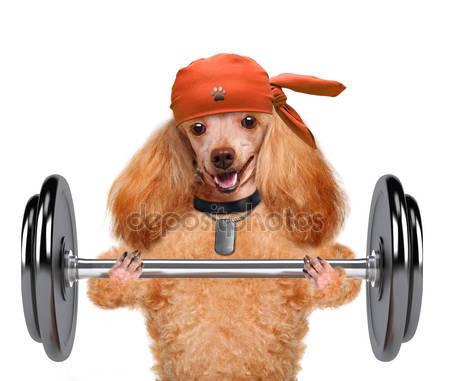 depositphotos_45193365-stock-photo-fitness-dog-lifting-a-heavy