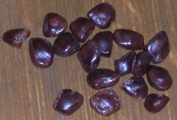 Семена тамаринда, Тамил Наду,  Индия