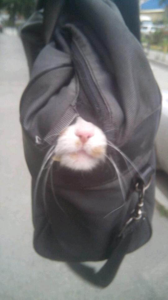 Кошку вот отдал на передержку