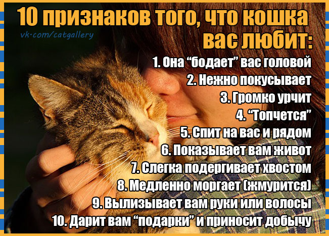 10-cat-love-points