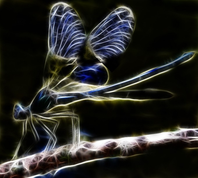 fractal_dragonfly_by_minimoo64-d3b561w