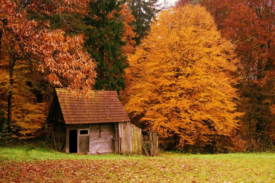 houseinwood01