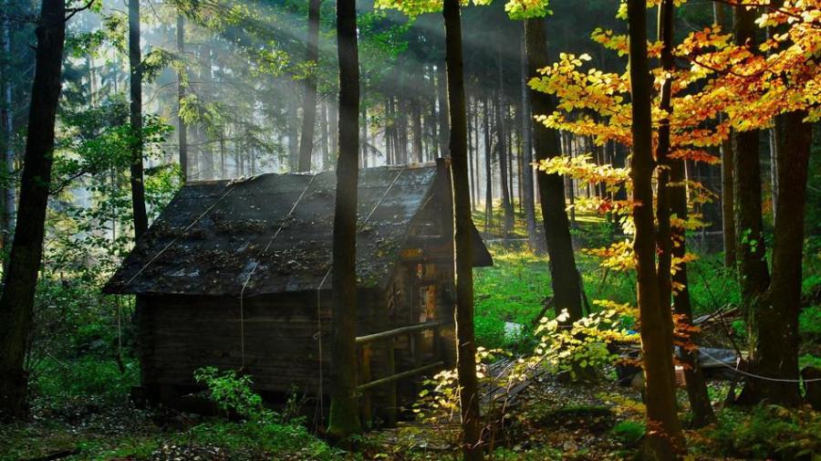 houseinwood02
