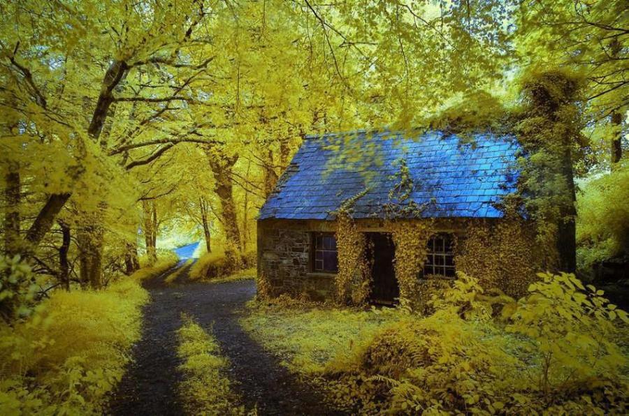 houseinwood06