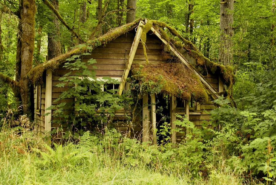 houseinwood15